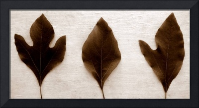 Sassafras Leaves in Sepia