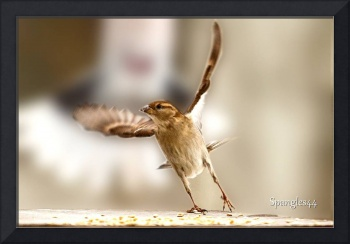 sparrow narrow escape