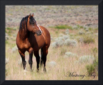 Honor~ King of Steens