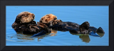 Sea Otter pair 2392
