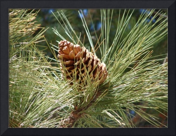 Pine Cone and Tassel