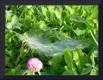 Sipider Web in Grass 616