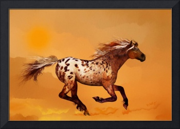An Appaloosa called Ginger