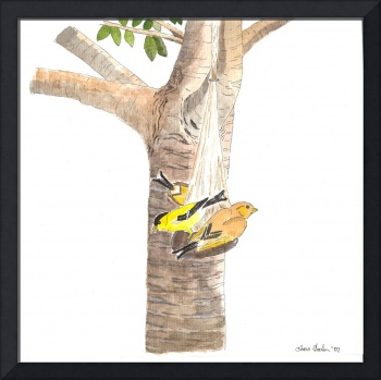 Goldfinches on Galaxy