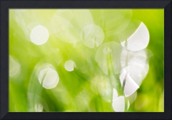 Green Abstract - Dewdrops in the Sunlit Grass 2