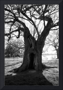 Tree with a Doorway bw