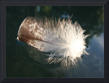 Floating Feather2