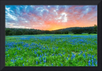 Fiery Sunset Over Bluebonnets