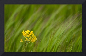 Simple yellow in a sea of green