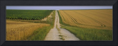 Dirt road passing through a wheat field