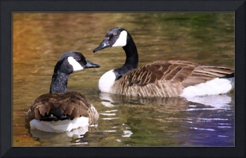 Canadian Geese Just UsTwo