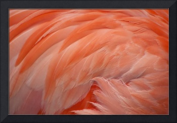 Pink flamingo feathers.