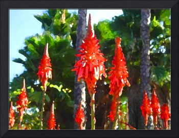 Aloe  Arborescens an Palm Trees