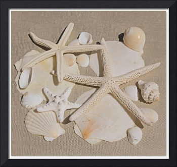 ORL-5250-1 Beach Collection. Sea stars and shells