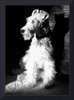 B&W Hogan in Sunbeam