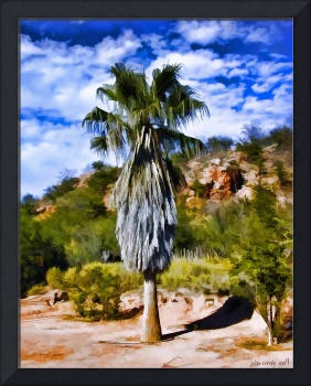 Granddad's Palm Tree at the Piedras Verdes Ranch