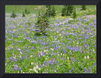 Alpine Floral - Mount Rainier National Park