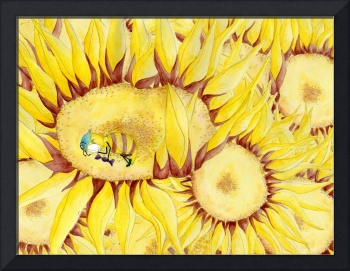 Honeybee asleep in sunflower