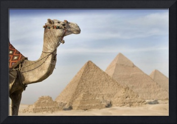 A Camel With The Pyramids In The Background Cairo