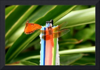 Winged Friends the Dragonfly and Butterfly