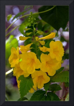 Yellow Bell Flower