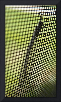 Bug on a Screen 2