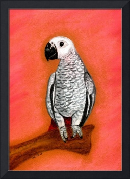 African Grey Parrot Bird Portrait Art Print