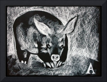 A for Aardvark