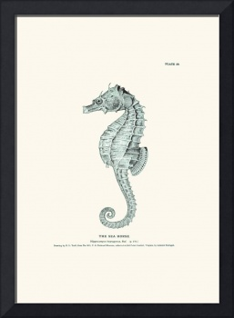 Vintage sea horse engraving poster