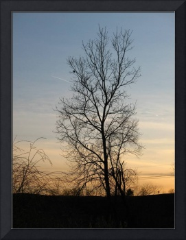 Tree against the sky at sunset