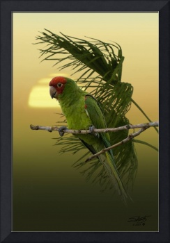 Red Masked Parakeet