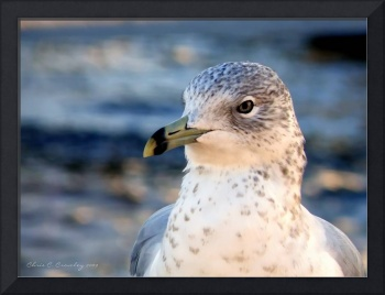 Winter Seagull