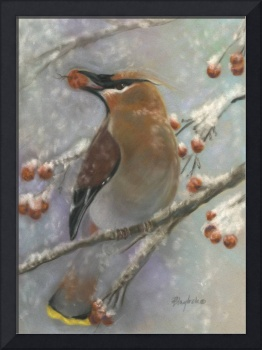 Waxwing and Berries