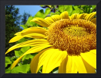 OFFICE ARTWORK Sunflower Sunlit Sun Flower Baslee