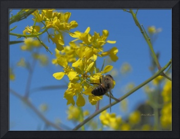 Honey Bee_4300093