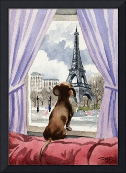 Dachshund in Paris