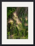 Whispy Wild Grass by Rich Kaminsky