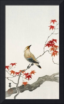 Japanese Bird on Maple by Ohara Koson