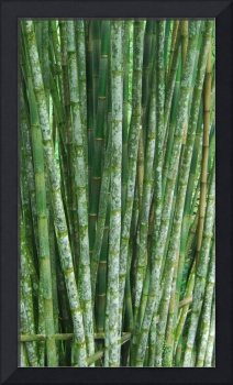 Bamboo Grove-Structured