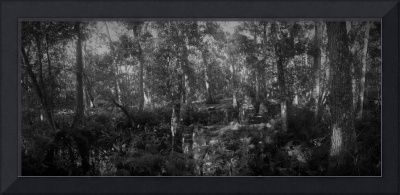 Brooker Creek Panorama No. 4