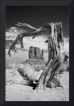 Desert Tree - infrared landscape