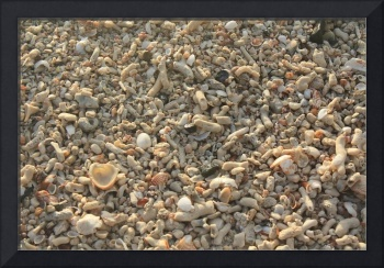 Thousands of Shells
