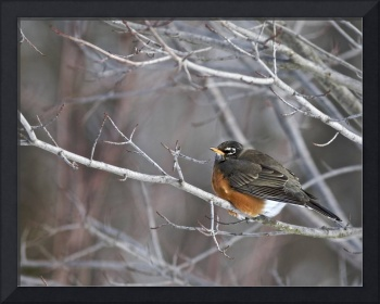 Robin in Winter by Jim Crotty
