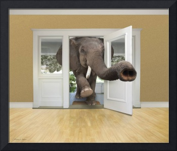African elephant barges into room