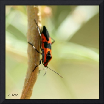 Black spotted Orange Insect