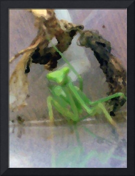 Abstracted Praying Mantis