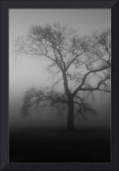 Moody Misty Tree
