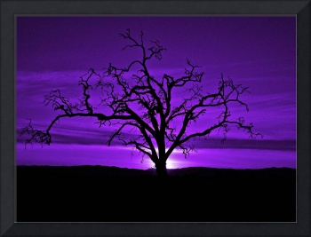 Naked Tree In Purple Skies