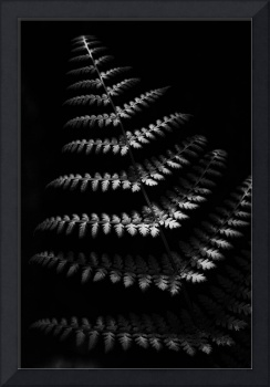 Fern in Black and White by Jim Crotty