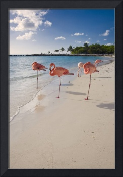 Flamingos on a Beach